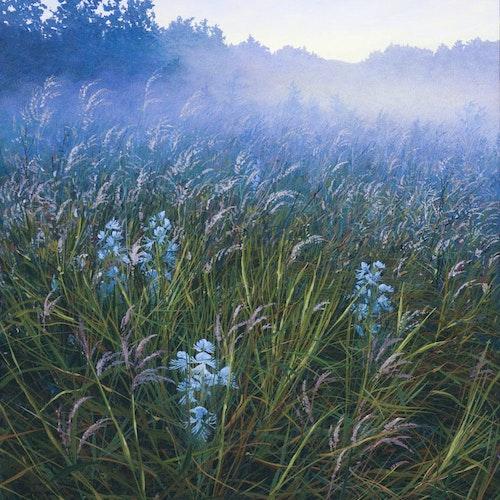 Prairie Orchids