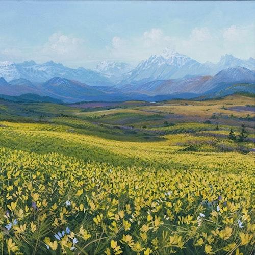 Rocky Mountain Plethora