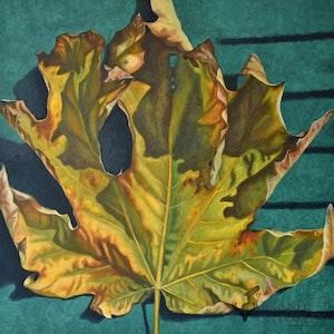 Six Point Leaf