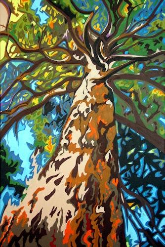 Tree Envy