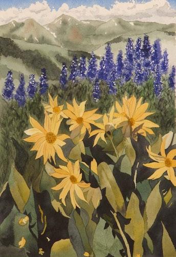 Rocky Mountain Sunflowers