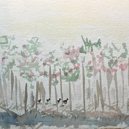 four deer running