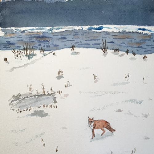 fox in winter storm at the beach